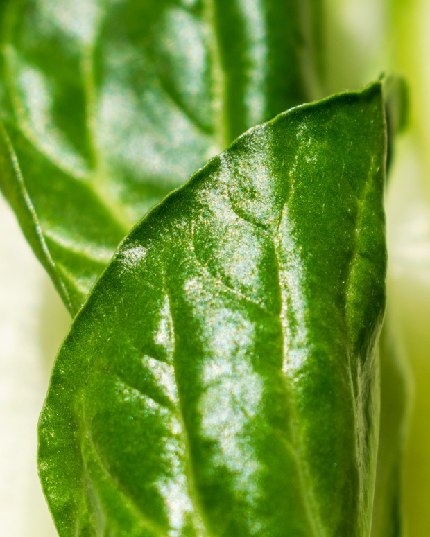 Food Photography Portfolio at ildiva.com - Chard leaf close-up